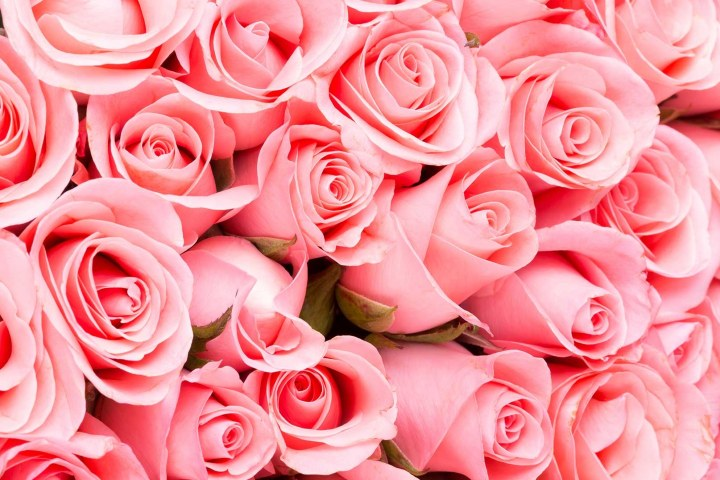Rosas-Frases-de-la-vida-1