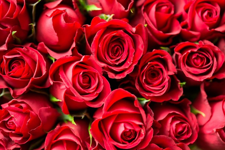 Rosas-rojas-Mundo-Flores-2