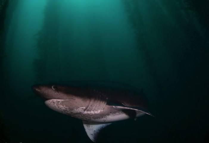 Tiburón en el Bosque acuático – Foto isaí Domínguez
