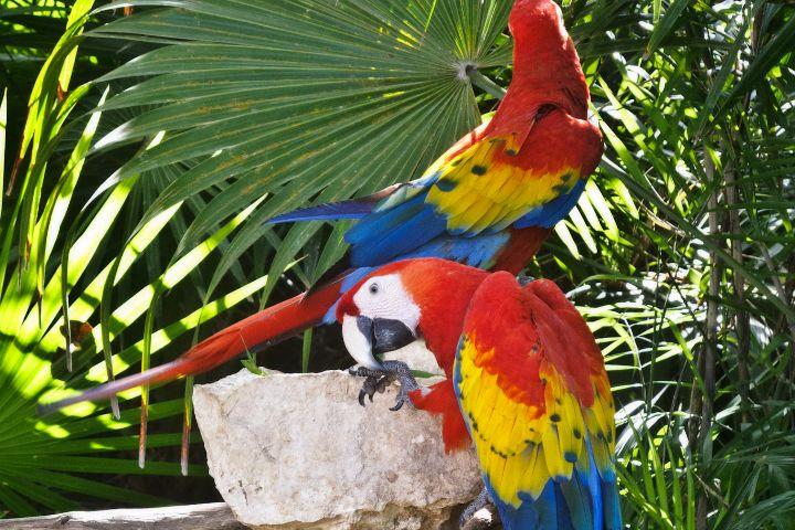 Un viaje familiar a Cancún. Guacamayas de Xcaret. Foto: Arturo Vez