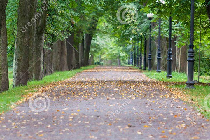 avenida-verde-31825530-2
