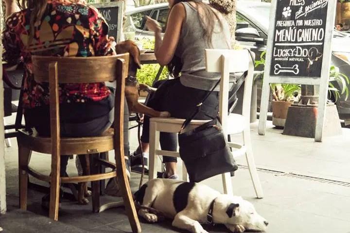 restaurantes-pet-friendly-para-desayunar-en-la-cdmx-1-2