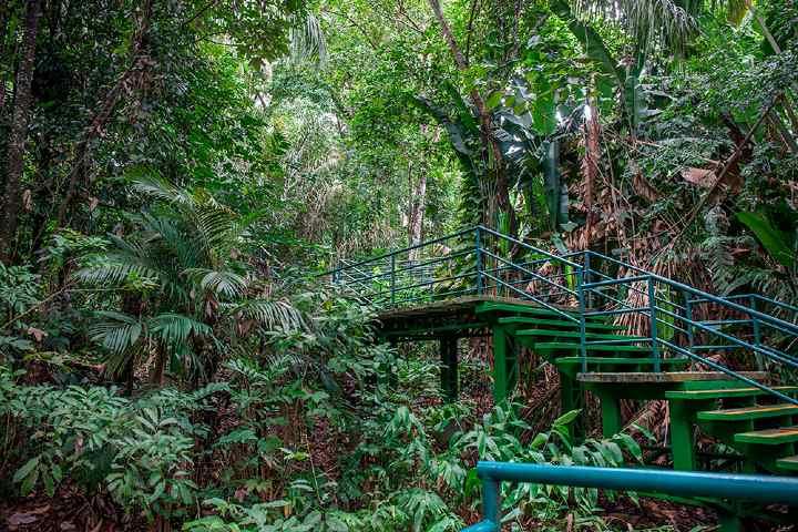 Foto_-Visit-Amazonas