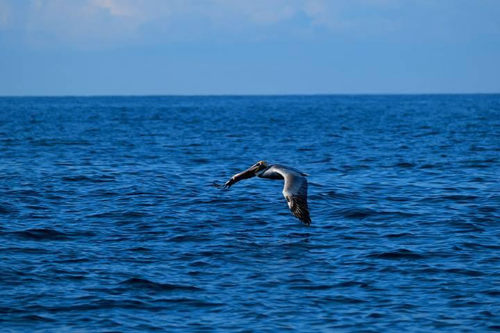 Ixtapa Zihuatanejo 2021 año de las ballenas. Foto: Visit IZ