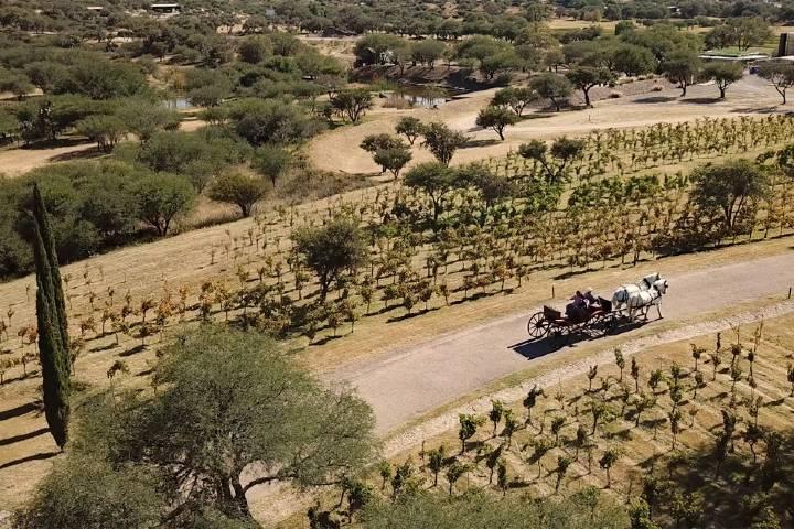 Manaia San Miguel de Allende Foto Valle de los Senderos 5