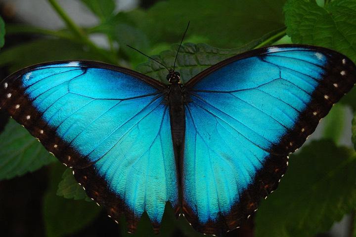 Mariposa.-Foto-Pablo-Flores.jpg
