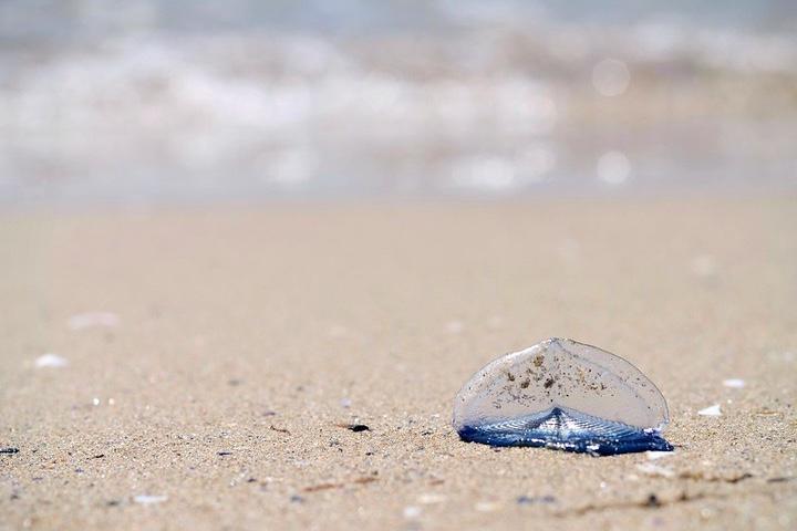 Medusa-en-la-playa.-Foto-Nazaret-GD-1-1