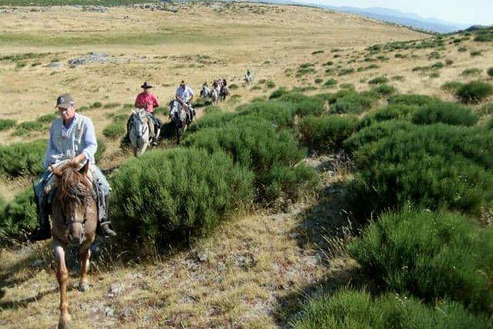 Monta-un-caballo-en-Viesca-Coachila-Mexico.-Foto-Archivo