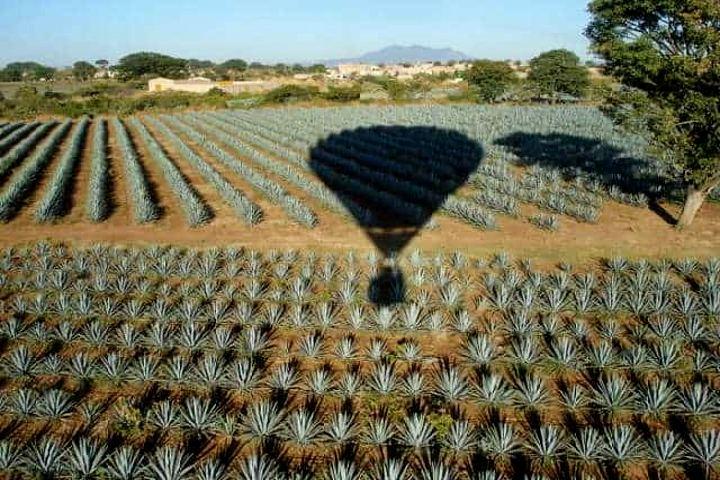 Vuelo-en-Tequila.-Foto-Archivo