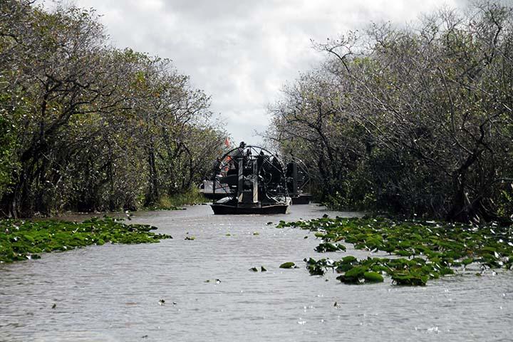 Everglades en Florida