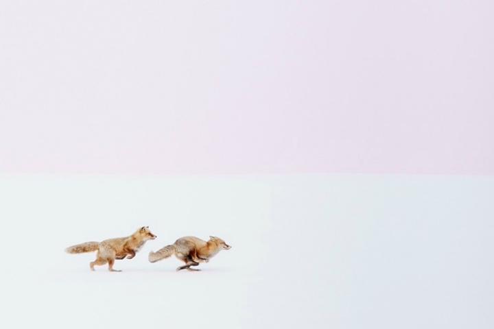 """""""¡Dondequiera que vayas, te seguiré!"""" Foto: Hiroki Inoue"""