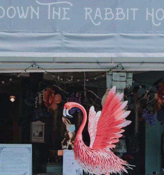 Down the Rabbit Hole. Foto: Joe Cárcamo