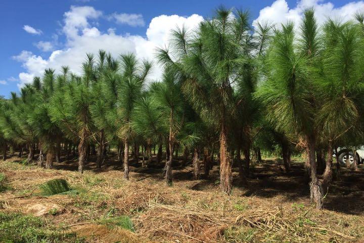 Bosque del ciclo verde. Foto Vivero Los Encinos