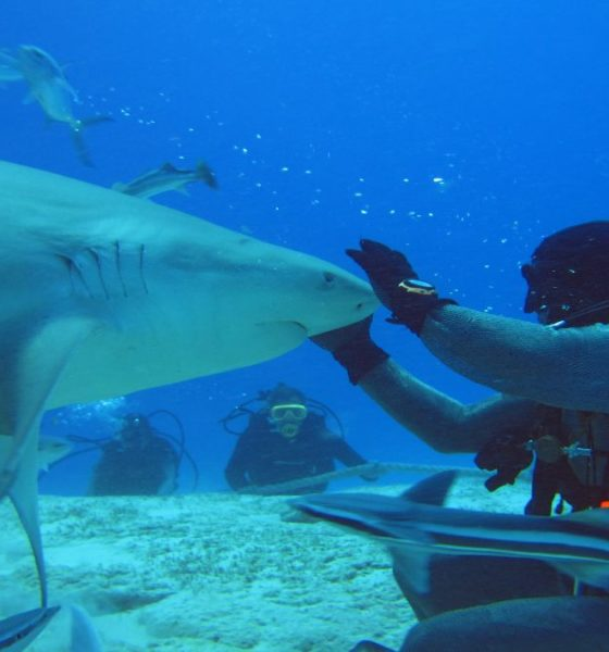 Buceo con tiburones toro en Playa del Carmen. Foto: Be Social Playa del Carmen
