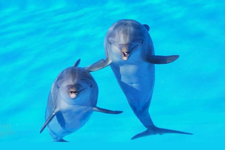 Delfin-arrebata-iPad.-Foto-roba66