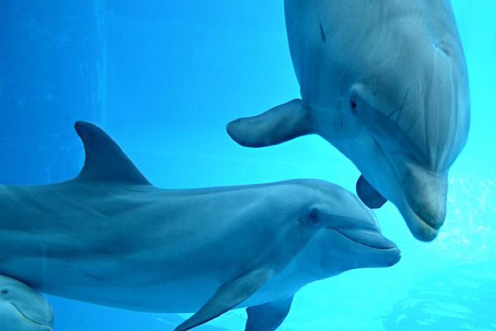 Dolphins.-Foto-Haku_Orka