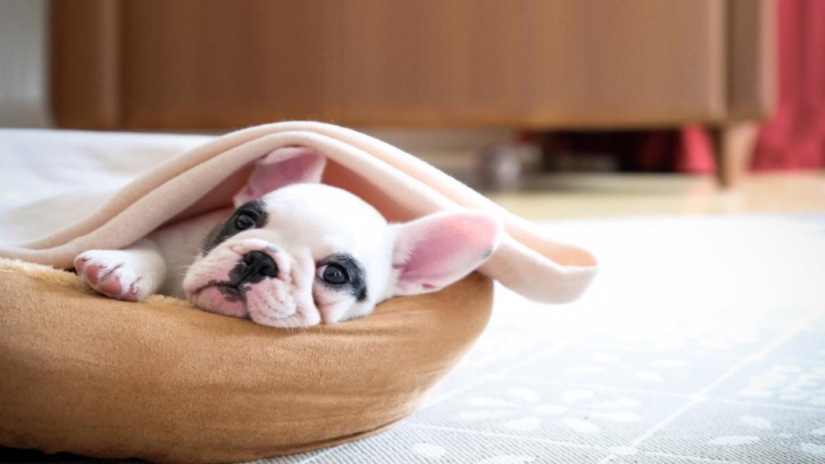 El programa Dog Friendly de Live Aqua permite que nuestras mascotas tengan un excelente hospedaje. Foto: Archivo