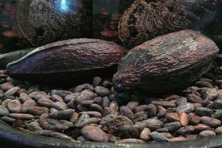 Festival-del-Cacao-al-Chocolate-en-Monterrey.-Foto-Patrizia-Ferraglioni