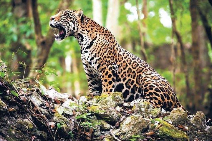 La fauna del lugar es espectacular. Foto: Cabañas de Calakmul