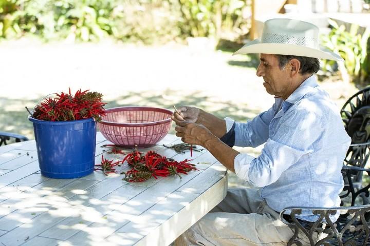 Temachtiani y sus procesos orgánicos. Foto: Walking México