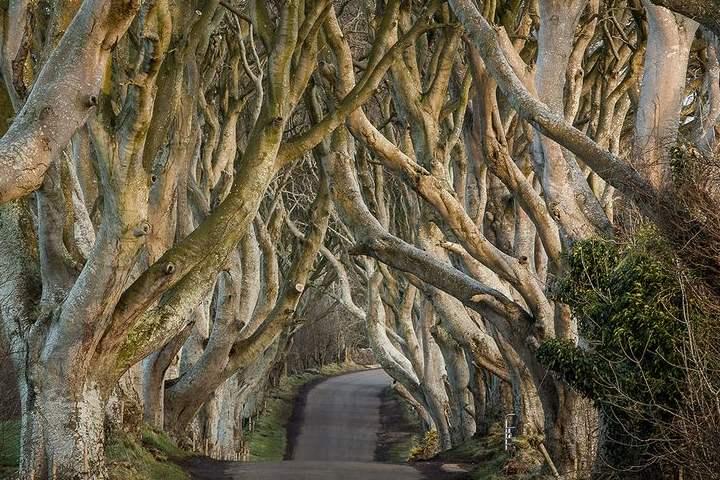 The Dark Hedges es una de las locaciones de GoT, una de las series de televisión más famosas del mundo. Foto: Belfastlive