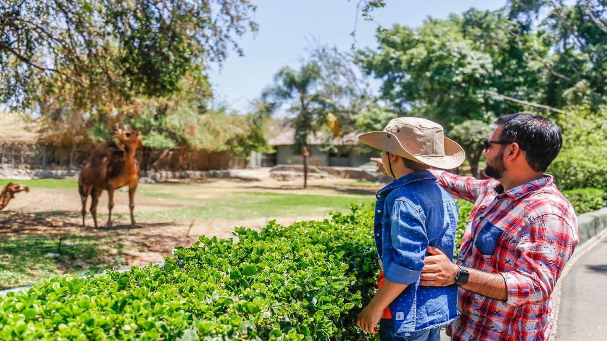 Día del Niño en Guadalajara. Foto: Archivo