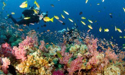 Acantilado Hin Daeng en Tailandia. Foto: Blueplanet