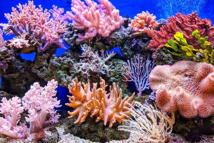 Corales Rojos. Foto: Q.U.
