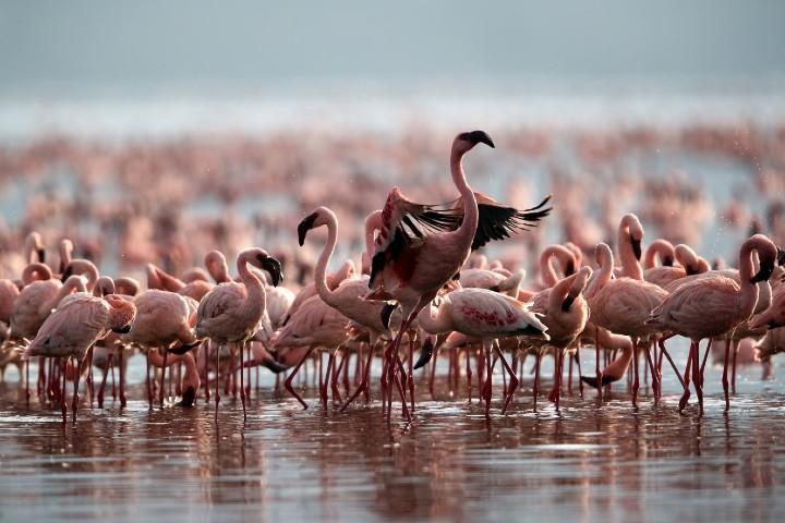 Pocas son las especies que pueden estar sin problemas en el lago. Foto: Miscerinos
