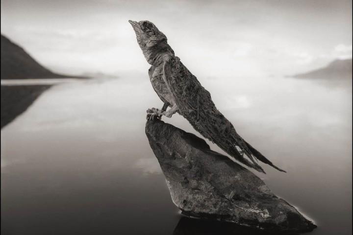 El Lago Natrón momifica a las aves. Foto: Nick Brandt