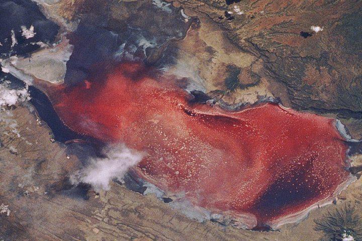 Lago Natrón de Tanzania se encuentra a las faldas de un volcán activo. Foto: Archivo