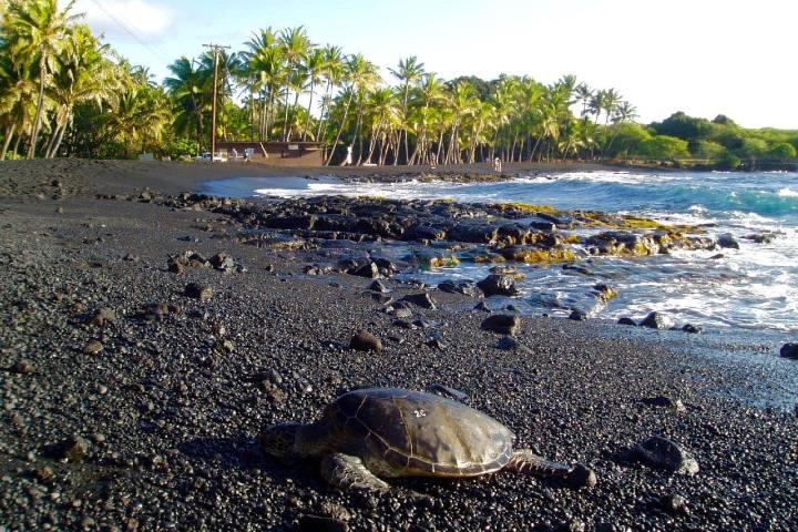Aquí preservan a las tortugas que se encuentran en peligro de extinción. Foto: Love Big Island
