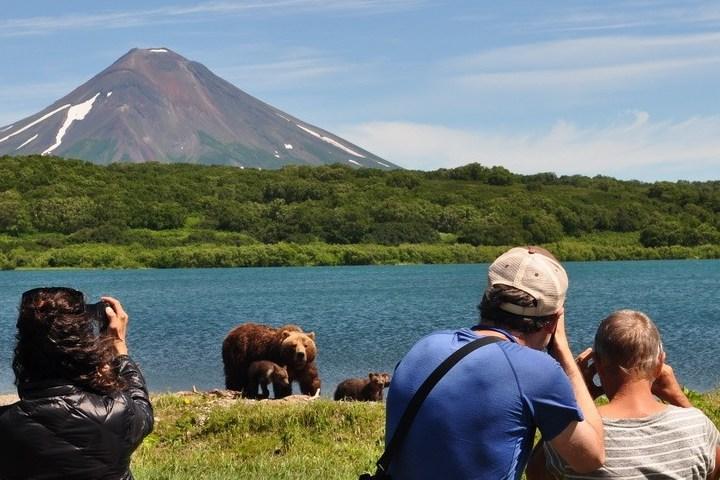 Cuidado con los osos, podrían llegar a ser peligrosos. Foto: Logitravel