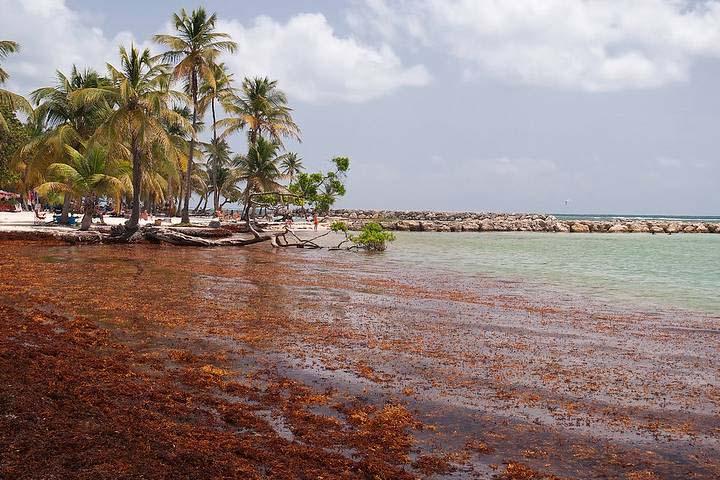 Acciones contra el sargazo en México: No canceles tus vacaciones