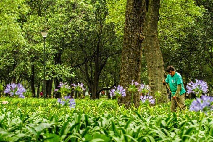 Bosques-CDMX-Chapultepec-Foto-Bosque-de-Chapultepec-13-1