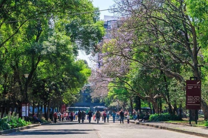 Bosques-CDMX-Chapultepec-Foto-Bosque-de-Chapultepec-3-1