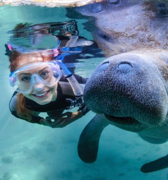 Disfruta del avistamiento y del nadar con manatíes en Florida. Foto: Visit Florida