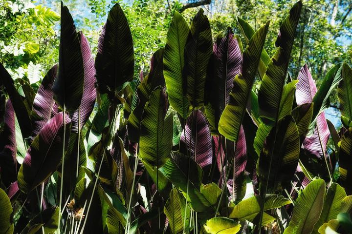La flora del Jardín Escultórico es una belleza digna de admirar. Foto: Andrea Di Castro