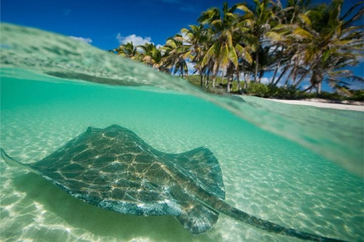 La naturaleza del Caribe Mexicano te dará experiencias únicas para ti y tus acompañantes. Foto: Playas del Mundo | Sitio Web