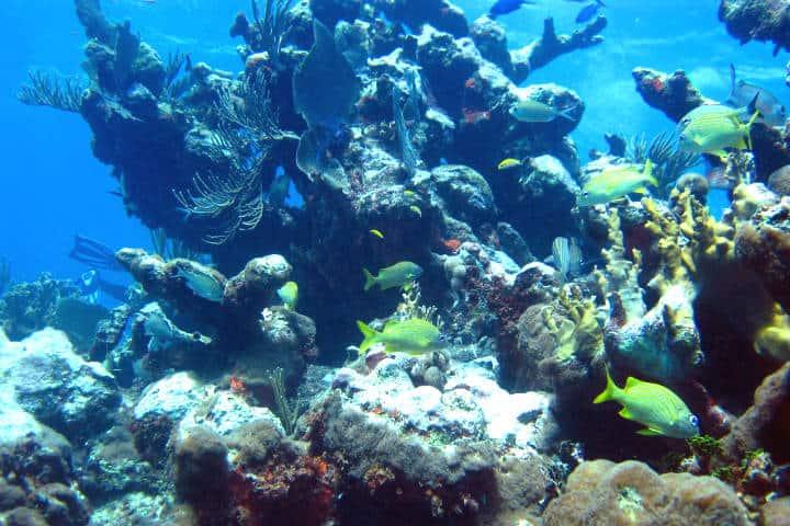 Laguna-Yal-ku-Riviera-Maya-Foto-Darrell