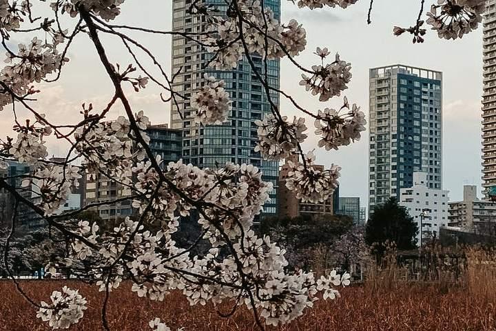 En un viaje con amigos por estos destinos podrás disfrutar de la naturaleza y la modernidad, tal cuál será el caso en Tokyo. Foto: DLKR Life