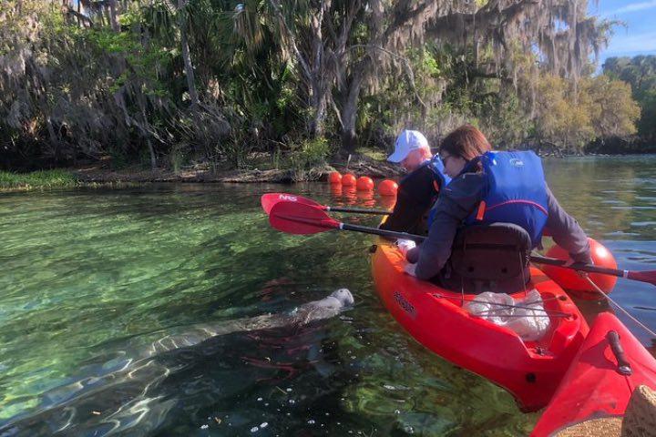 Pasea en kayak por Blue Springs ¡Podrás encontrarte con un manatí! Foto: Viator