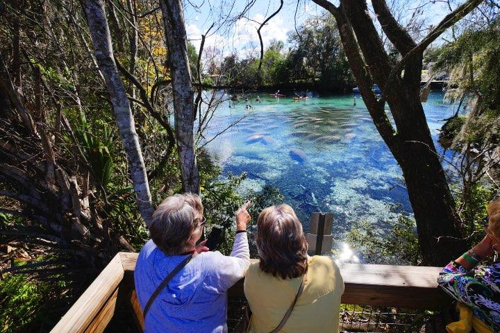 Tres Hermanas Springs es un sitio perfecto para el avistamiento de manatíes. Foto: Visit Florida