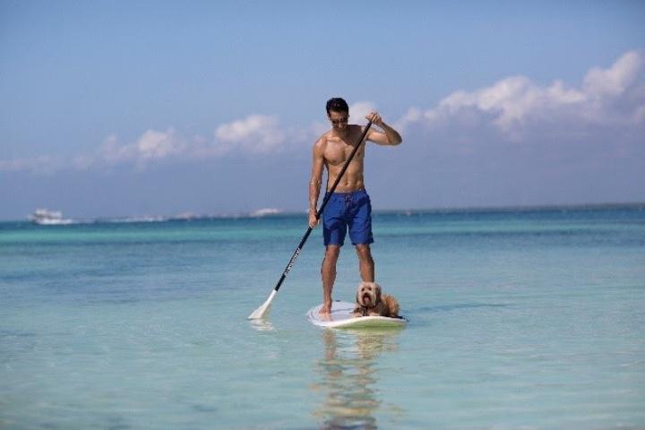Actividades de playa con tu mascota. Foto: Turismo Caribe Mexicano