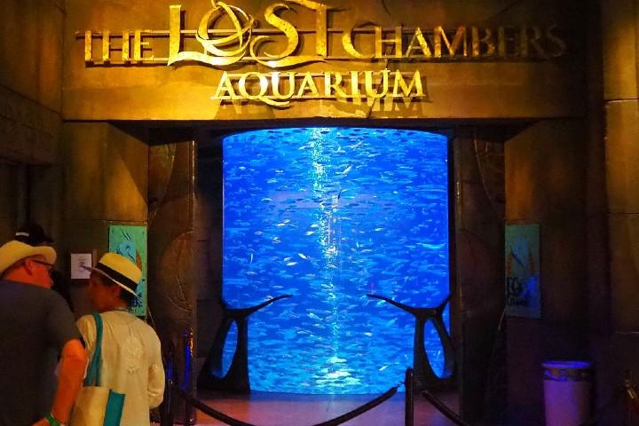 Disfruta de las especies marinas qué hay en el acuario del Parque Aquaventure de Dubái. Foto: Rachel's Ruminations
