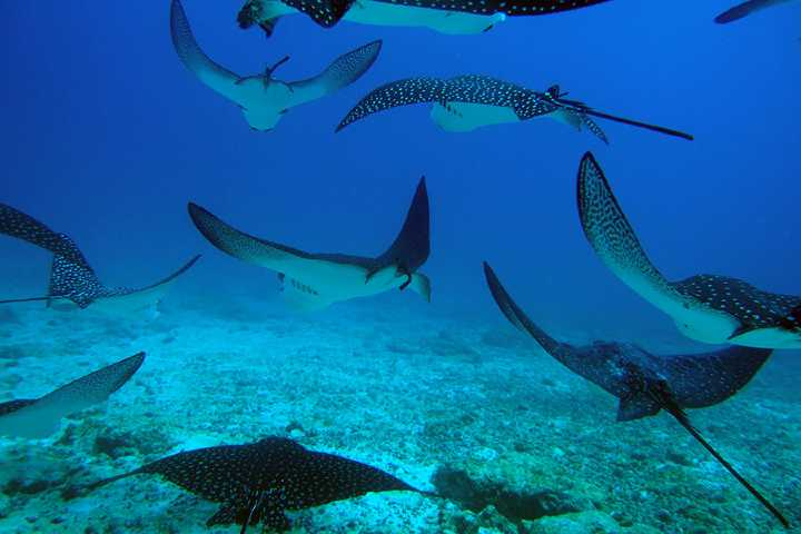 La vida debajo del mar es maravillosa. Foto: Academy Bay Diving