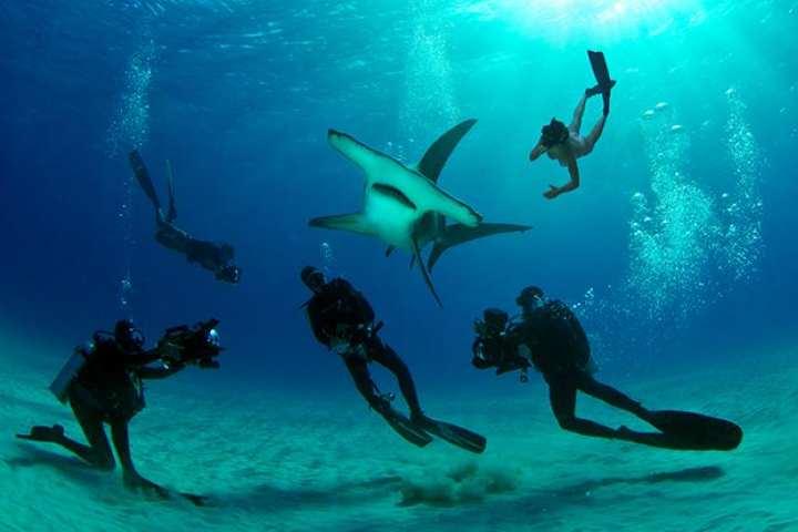 El buceo es una actividad espectacular. Foto: Vive Nuestro Mundo