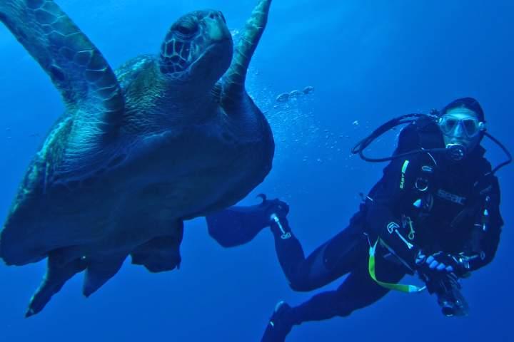 Busca la mejor opción para realizar la actividad. Foto: Buceo y Viajes