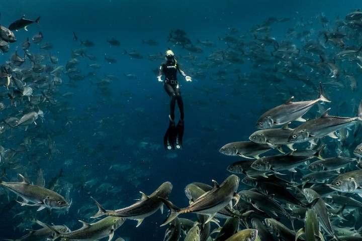 Buceo en Islas Galápagos. Foto: Metrojourneys