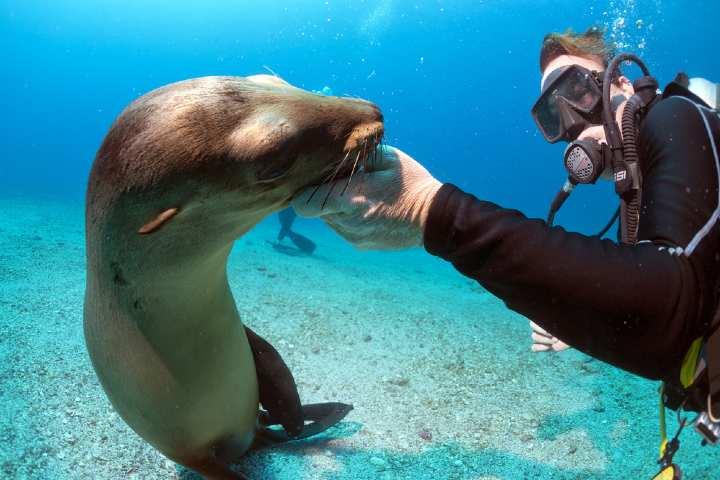 Disfruta del buceo en las Islas Galápagos. Foto: Notimundo
